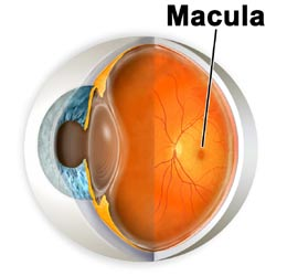 El tabaco y la retina